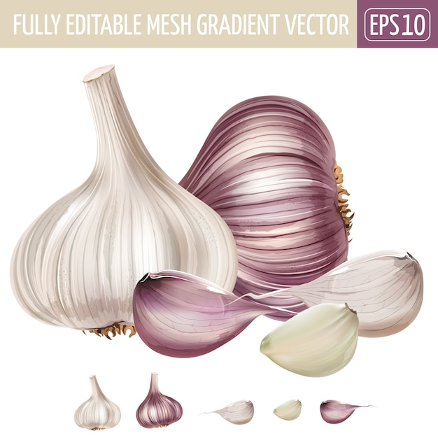 Ilustração de alho em branco Vetor Premium
