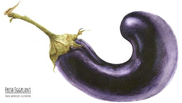 Ilustração de aquarela rastreada berinjela roxa fresca Vetor Premium