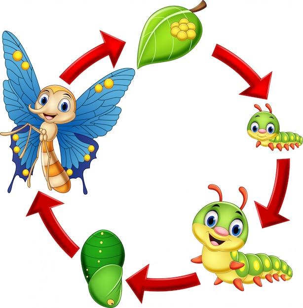 Ilustração, de, borboleta, ciclo vida Vetor Premium