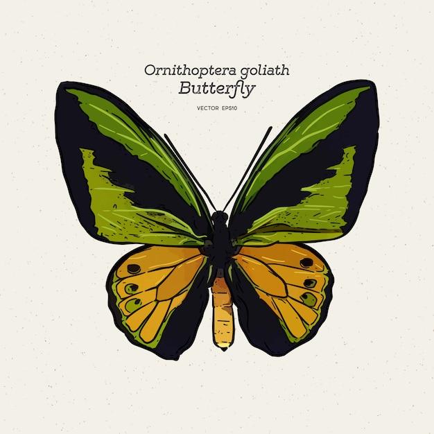 Ilustração de borboleta ornithoptera goliath Vetor Premium