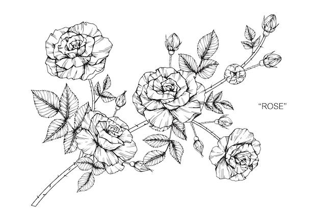 ilustração de desenho de flor rosa baixar vetores premium
