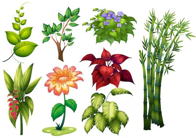 Ilustra o de diferentes tipos de plantas e flores for Tipos de plantas forestales