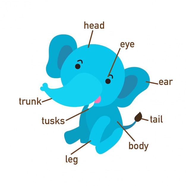 Ilustração, de, elefante, vocabulário, parte, de, body.vector Vetor Premium