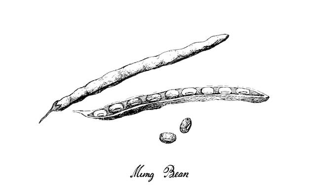 Ilustração de feijão mung desenhado à mão Vetor Premium