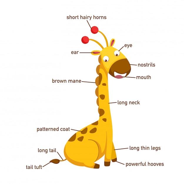 Ilustração, de, girafa, vocabulário, parte, de, body.vector Vetor Premium