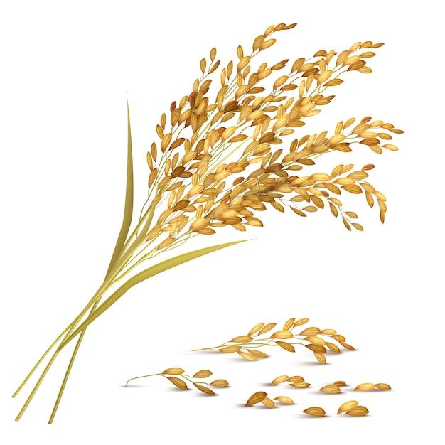 Ilustração de grãos de arroz Vetor grátis