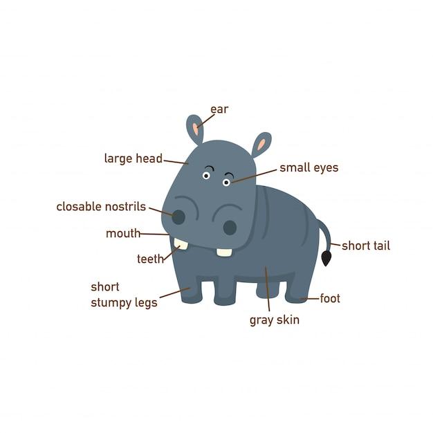 Ilustração, de, hipopótamo, vocabulário, parte, de, body.vector Vetor Premium