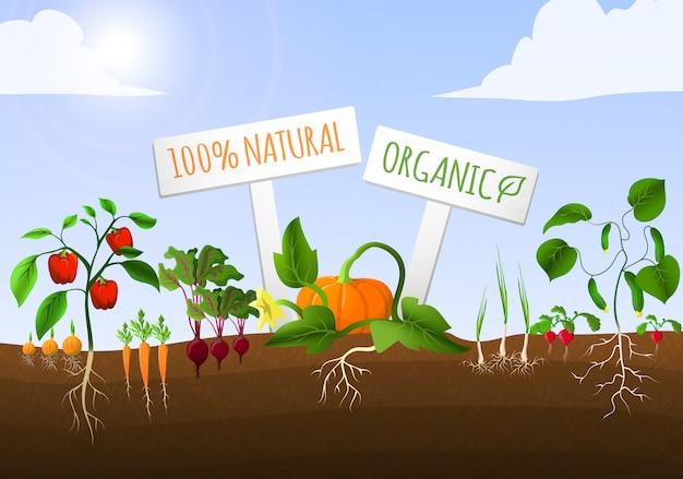 Ilustração de jardim vegetal Vetor grátis