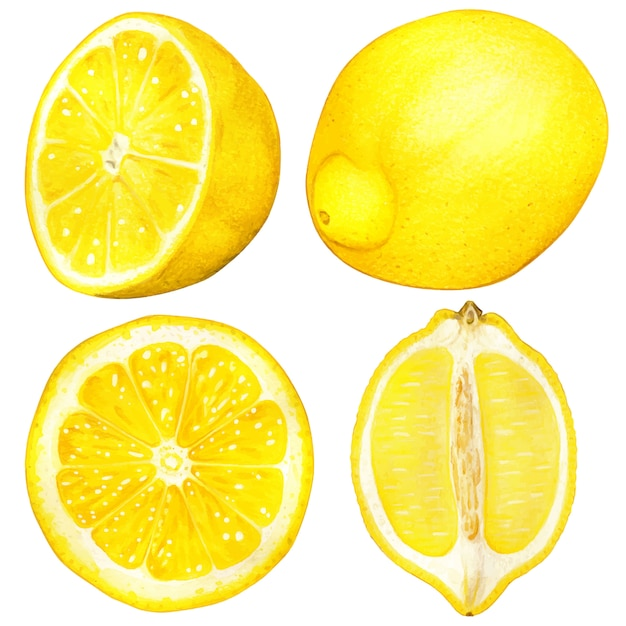 Ilustração de limão aquarela mão desenhada de alta qualidade Vetor Premium