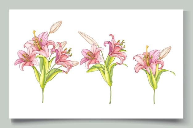 Ilustração de lindas flores de lírio desenhada à mão Vetor grátis