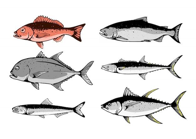 Ilustração de menu definido de peixe Vetor Premium
