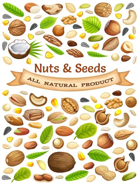 Ilustração de nozes e sementes Vetor grátis