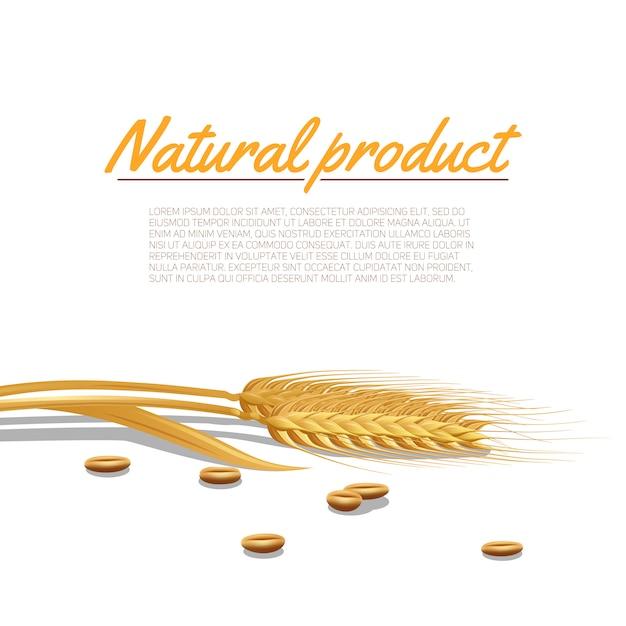 Ilustração de orelha de trigo Vetor grátis