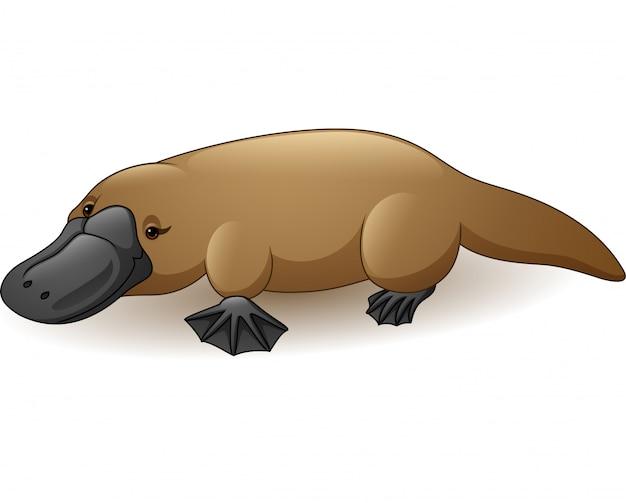 Ilustração de ornitorrinco isolado no fundo branco Vetor Premium