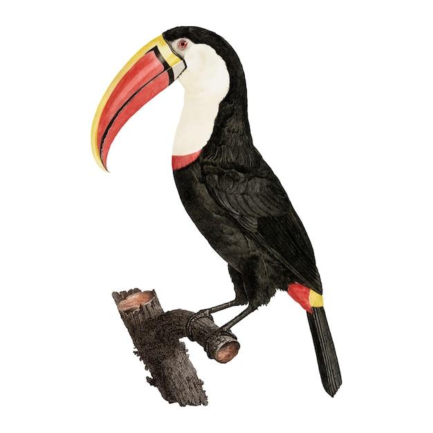 Ilustração de pássaro vintage Vetor grátis