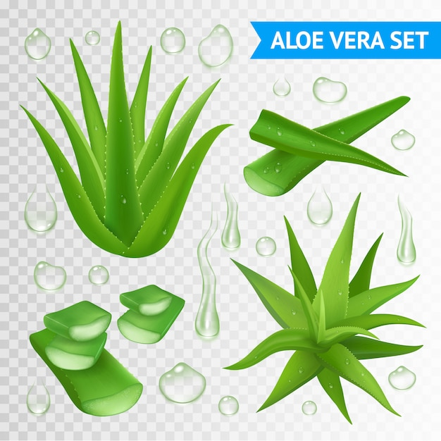Ilustração de planta de aloe vera Vetor grátis