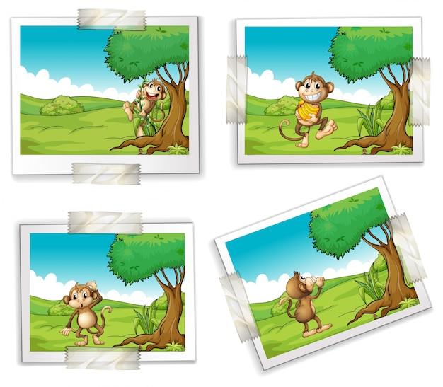 Ilustração de quatro fotografias de macacos Vetor grátis
