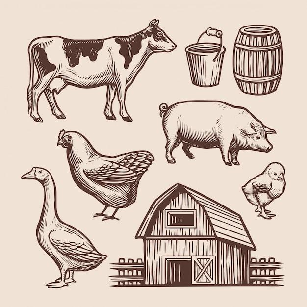Ilustração desenhada à mão do elemento agrícola Vetor Premium