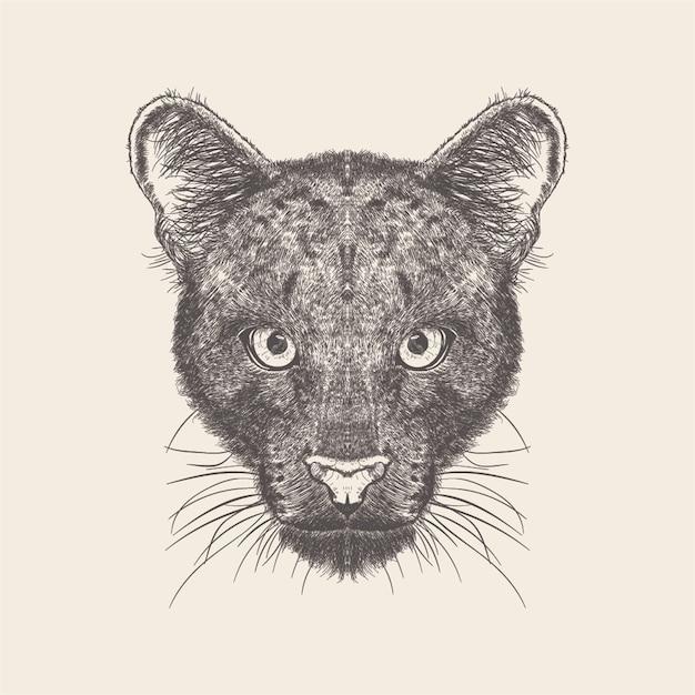 Ilustração do lobo do projeto desenhado mão. Vetor Premium