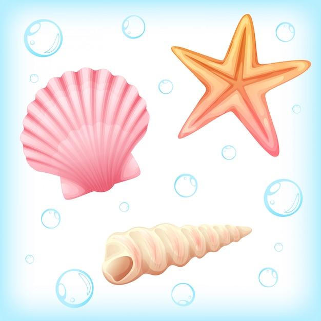 Ilustração do vetor de marisco e estrela do mar Vetor Premium