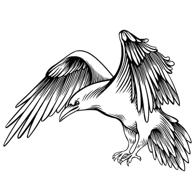 Ilustração do vetor de um corvo. esboçado pequeno corvo. desenho à mão livre monocromático. gráfico linear. pássaro bonito preto e branco estilizado. imitação de desenho de caneta realista. animal art. Vetor Premium
