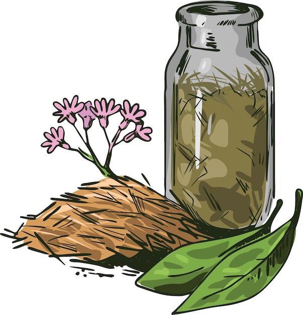 Ilustração em vetor casca de cinchona. flores desabrochando e folhas verdes Vetor Premium