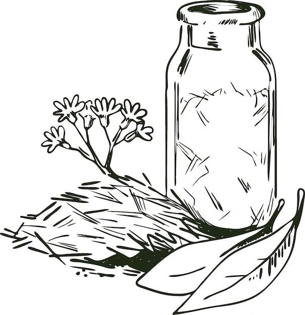 Ilustração em vetor casca de cinchona. flores e folhas desabrochando, garrafa com ervas secas Vetor Premium