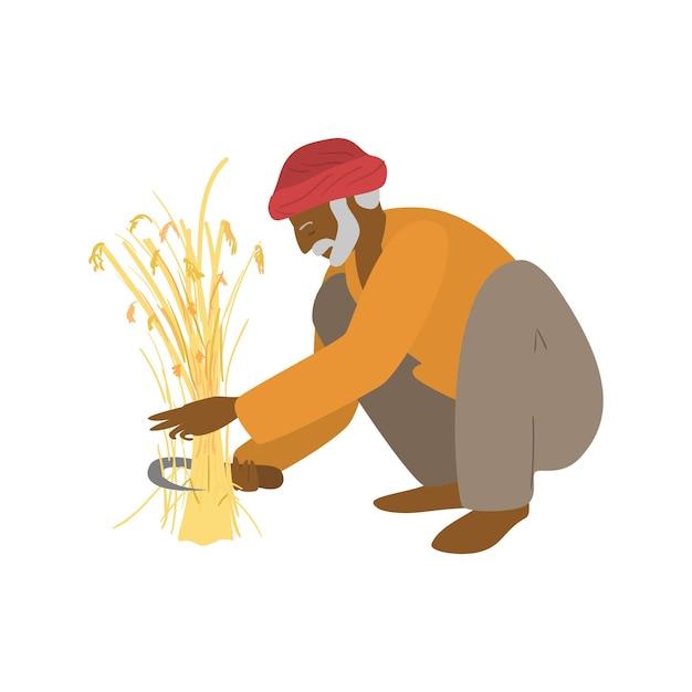 Ilustração em vetor de um fazendeiro indiano idoso sentado nas ancas cortando o trigo Vetor Premium