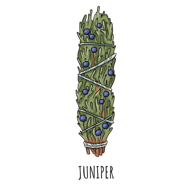 Ilustração isolada da vara mão desenhada doodle prudente do borrão. pacote de erva de zimbro Vetor Premium