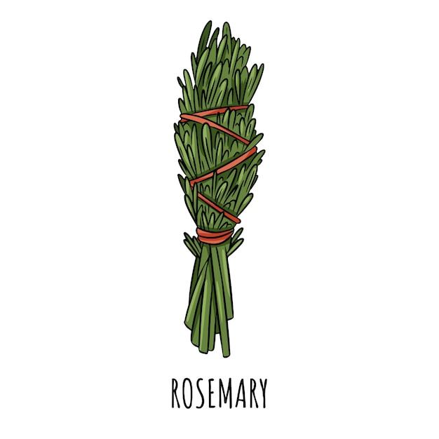 Ilustração isolada da vara mão desenhada doodle prudente do borrão. pacote de ervas de alecrim Vetor Premium