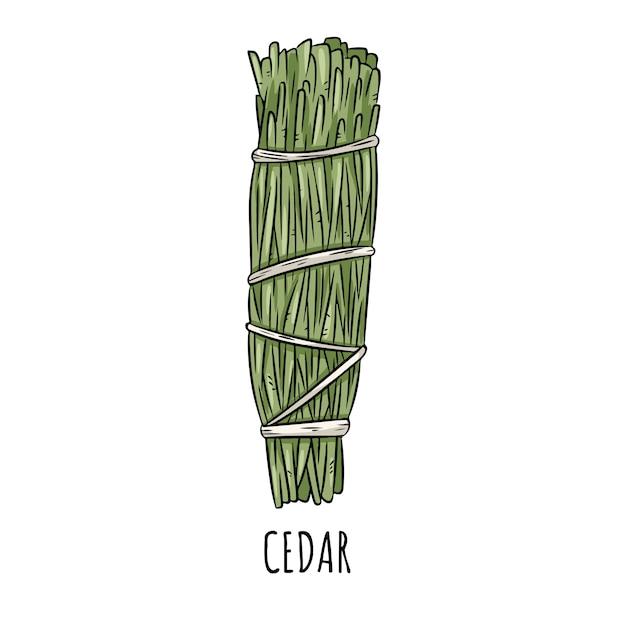 Ilustração isolada da vara mão desenhada doodle prudente do borrão. pacote de ervas de cedro Vetor Premium