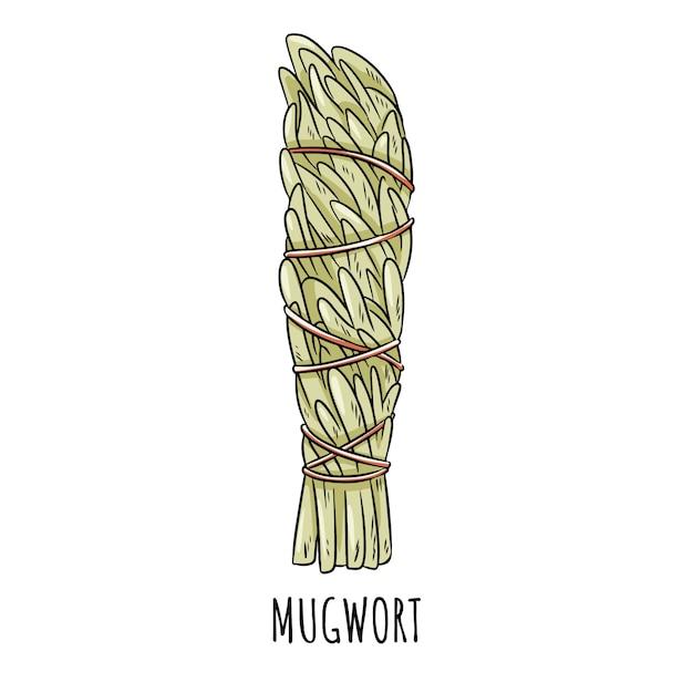 Ilustração isolada da vara mão-tirada prudente do borrão do borrão. pacote erva artemísia Vetor Premium