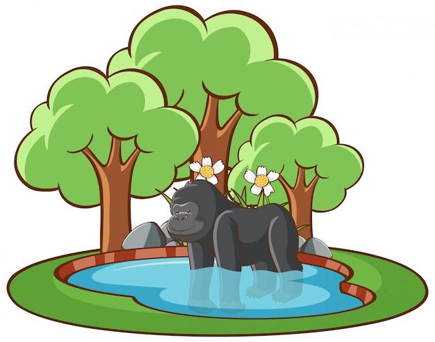 Ilustração isolada de gorila na lagoa Vetor grátis