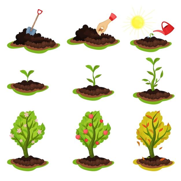 Ilustração mostrando estágios de crescimento da planta. processo de plantio de sementes de árvores com maçãs maduras. tema de jardinagem e cultivo Vetor Premium