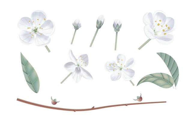 Ilustração realista vintage flor de cerejeira. estilo aquarela pastel floral. Vetor Premium