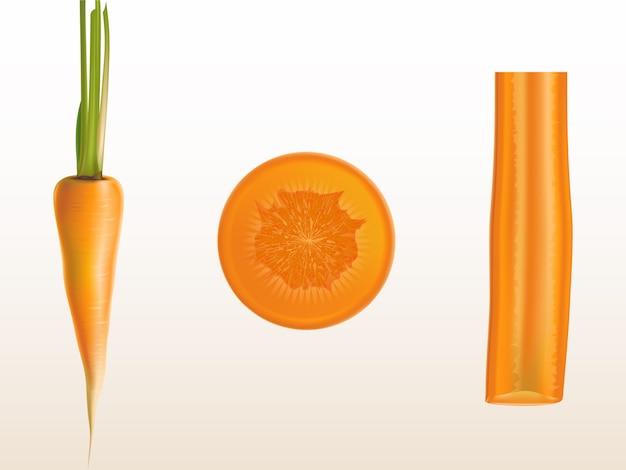 Ilustração realística das partes alaranjadas da cenoura, as inteiras e cortadas isoladas no fundo. Vetor grátis