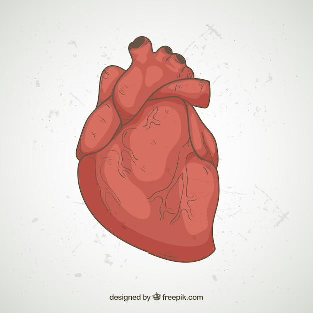 Ilustração realística do coração Vetor grátis