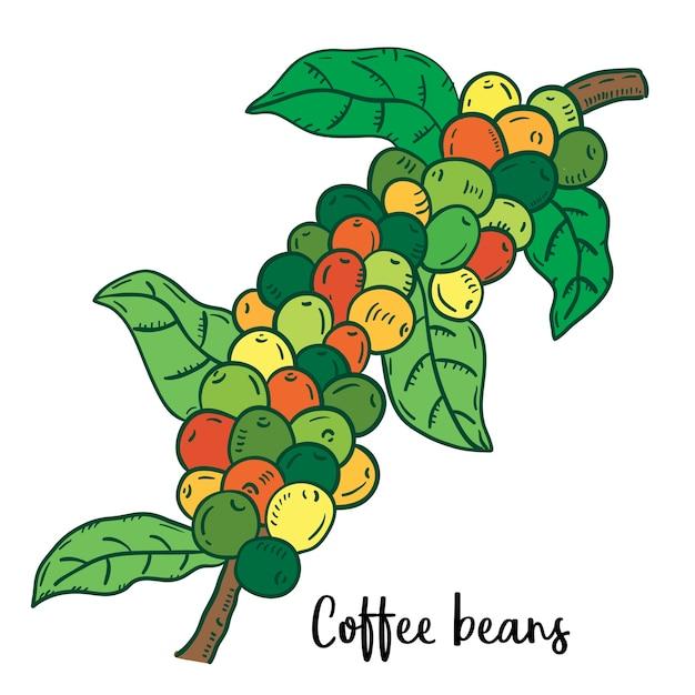 Ilustração tirada mão de feijões de café. Vetor Premium