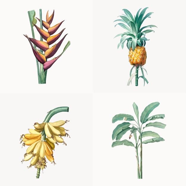 Ilustração vintage de conjunto de plantas tropicais Vetor grátis