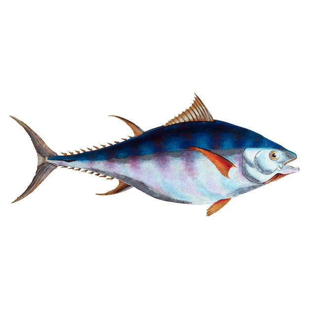 Ilustração vintage fish Vetor grátis