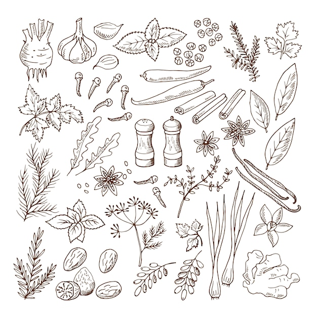 Ilustrações de mão desenhada de diferentes ervas e especiarias. conjunto de fotos de vetor isolado no branco Vetor Premium