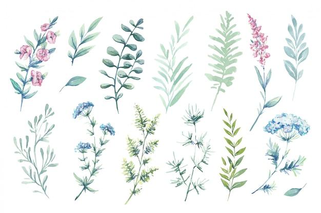 Ilustrações em aquarela. clipart botânico. conjunto de folhas verdes, ervas e galhos. Vetor Premium
