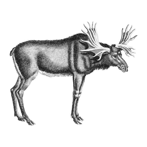 Ilustrações vintage de alce Vetor grátis