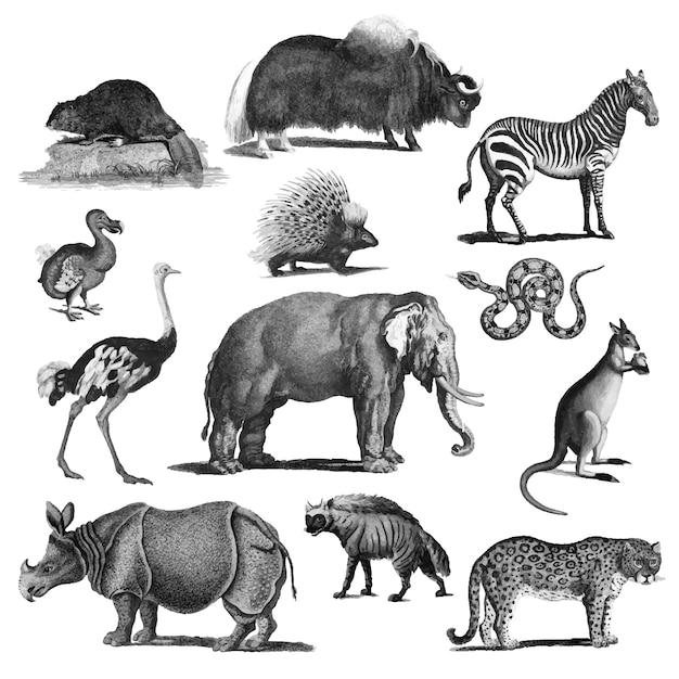 Ilustrações vintage de animais Vetor grátis
