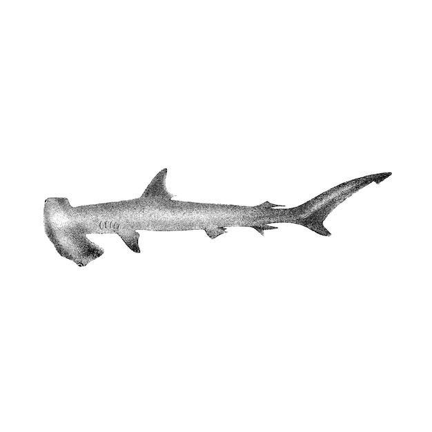 Ilustrações vintage de tubarão com cabeça de martelo Vetor grátis