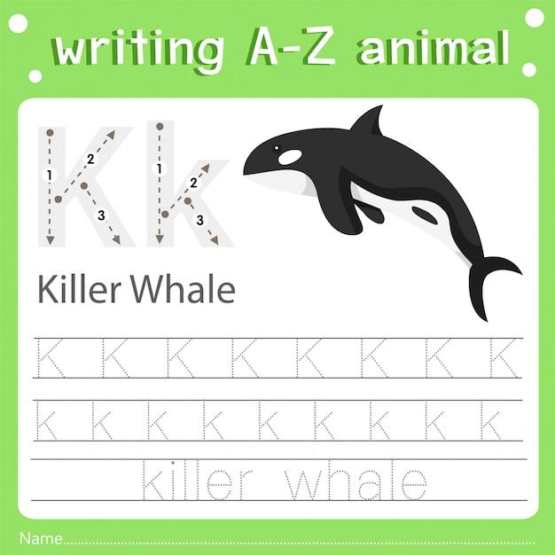 Ilustrador de escrever az animal k baleia assassina Vetor Premium