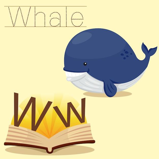 Ilustrador de w para vocabulário de baleia Vetor Premium