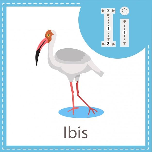 Ilustrador do pássaro ibis Vetor Premium