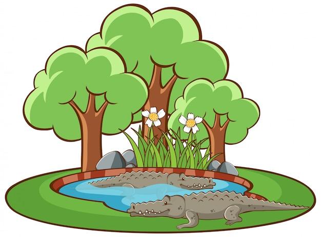 Imagens isoladas de crocodilos no parque Vetor grátis