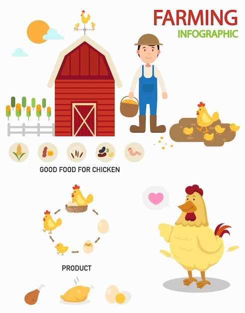 Infografia de fazenda de galinha, ilustração Vetor Premium